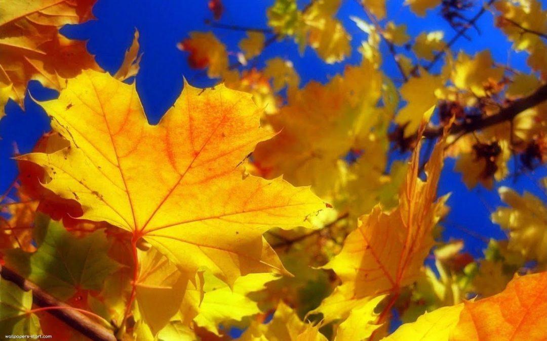 Осенняя пора очей очарованье в ОЦ Алеся