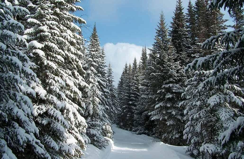 Зима! Зима! Зима!